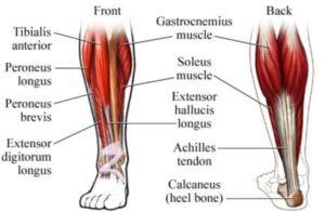 Calf Muscles, build bigger calves